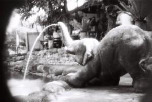 Undeniably-an-elephant-2015,14x21cmweb